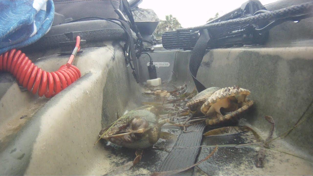 Port st joe florida scallops youtube for Port st joe fishing report