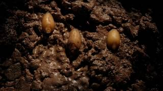 Seed germination to growth time lapse filmed over 10 weeks