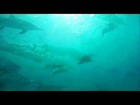 Seabat - Deep Ocean Canyon