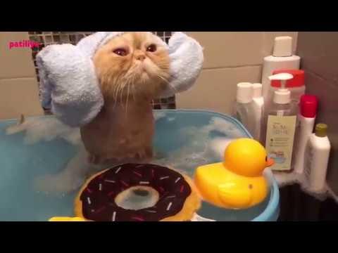 Kediler yıkanır mı? Kediler yıkanmaktan hoşlanır mı? (Cevaplıyoruz)