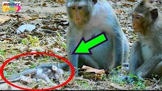 baby monkey very scare