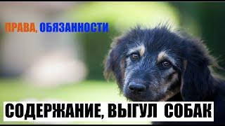 Содержание, выгул домашних животных (собак)