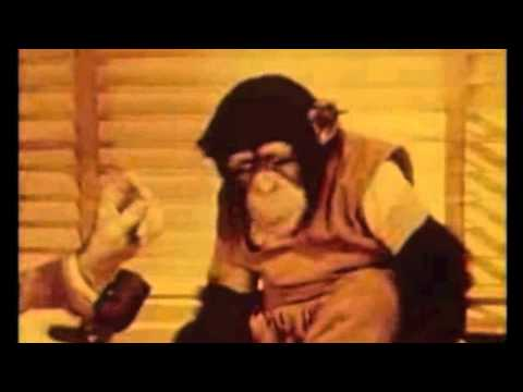 Baby Chimp Learns To Speak!