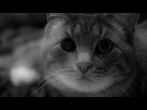 cat exercise wheel amazon