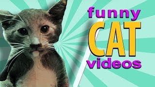 ZOOLAND - BEST SCARED CAT !!! FUNNY PRANKS WITH CATS !!! 🐱 😊