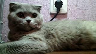 Как узнать что кошка беременна?(, 2017-01-21T21:43:54.000Z)