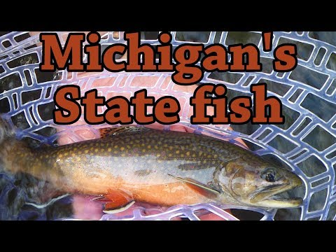 Catching Michigan's State Fish - Native BROOK Trout & RAINBOWS