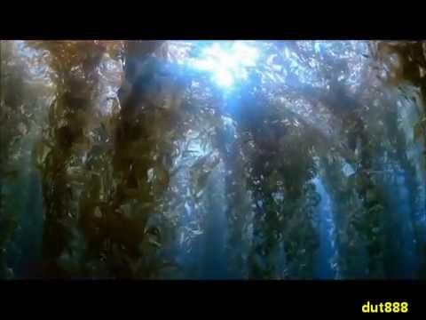 national geographic wild - amazing motion ! miracle of life