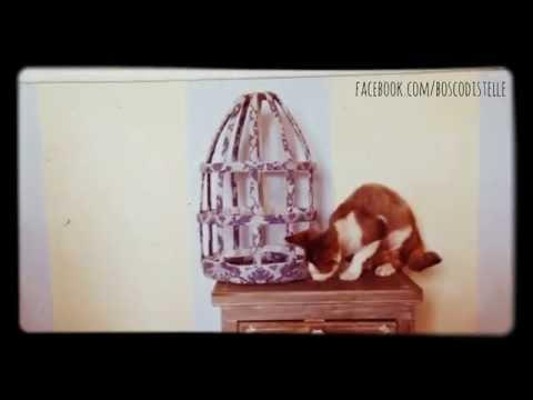 Cute Devon Rex cat Uendi PLAYTIME!