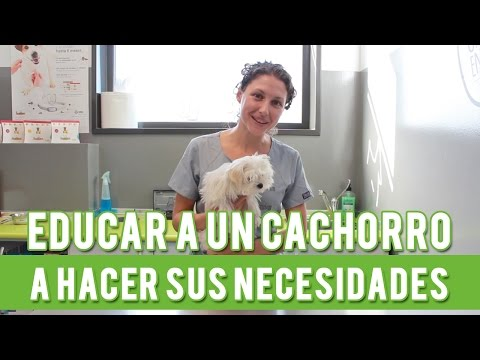 Cmo Educar A Un Cachorro A Hacer Sus Necesidades | Adiestramiento Canino