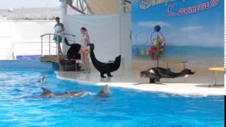 Коктебель. Дельфинарий. 2016 год