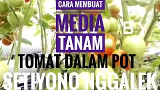 Cara Memilih Pupuk Organik Untuk Tanam Tomat Agar Berbuah Lebat.