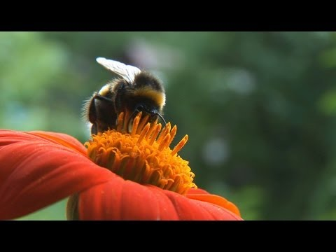 The buzz about pesticides - by Nature Video