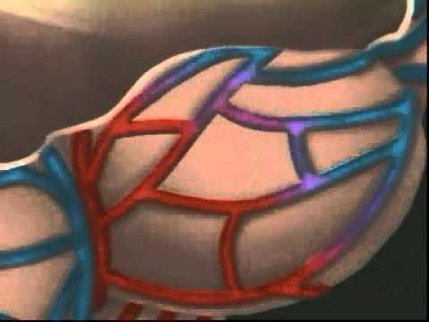 Hệ hô hấp ở người - Diễn Đàn Kiến Thức