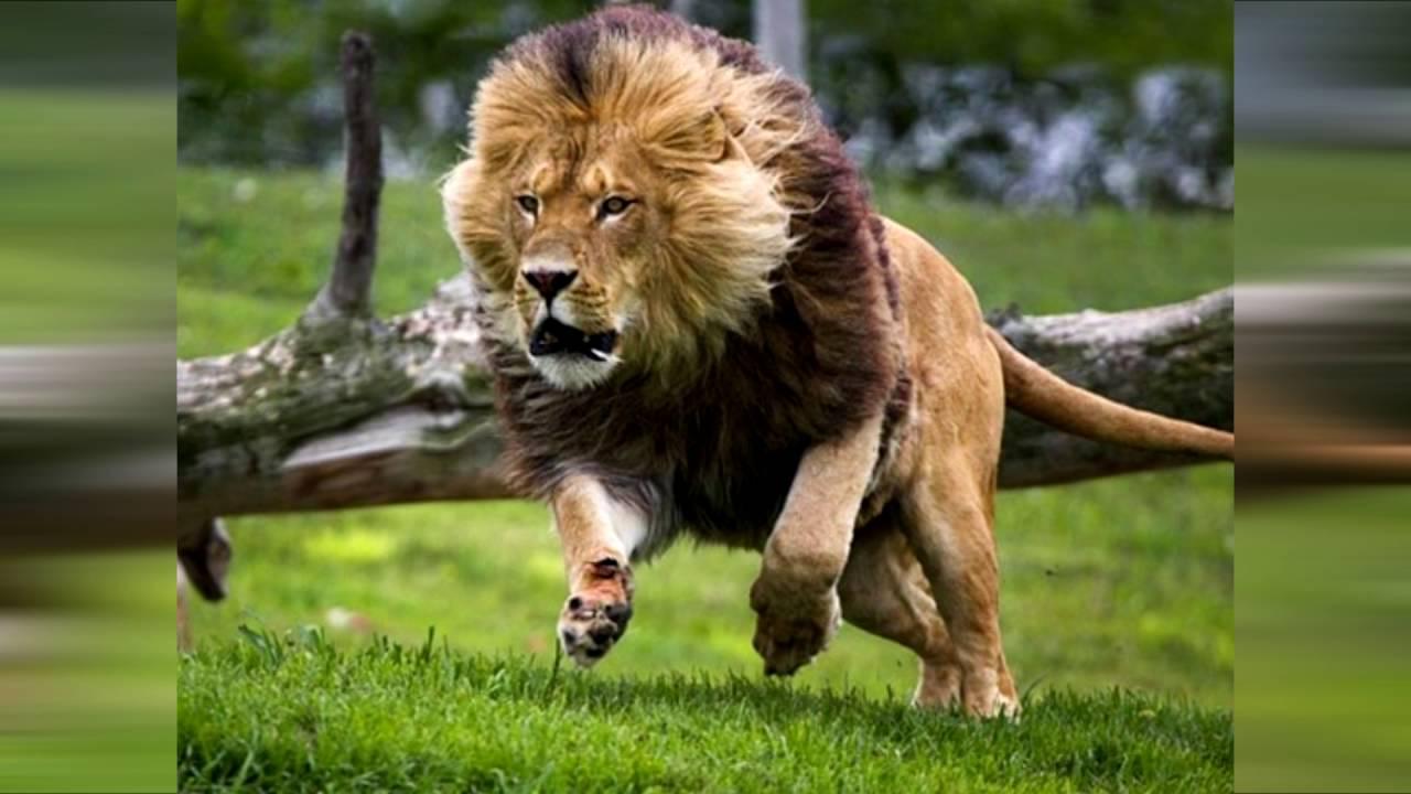 animales terrestres - photo #4