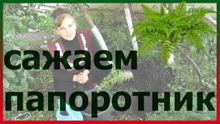видео Папоротник: посадка, размножение и уход за растением в саду