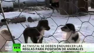 Canadá, conmovida por la matanza de 100 perros