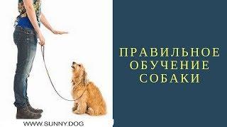 Правильное обучение собаки
