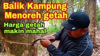 Download Balik kampung menoreh getah  harga getah makin mahal