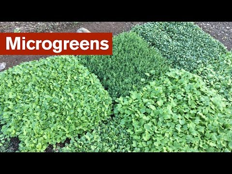 I Changed My Mind About Microgreens