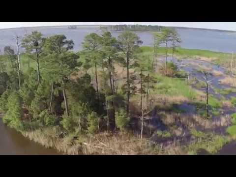 Blackwater Wildlife Refuge by Air