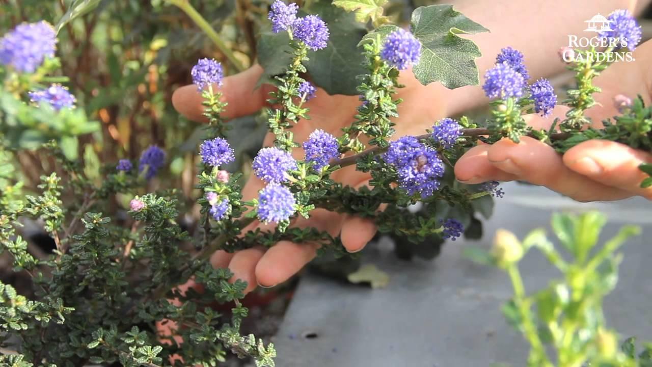 California Friendly Gardening Solutions Gardening With