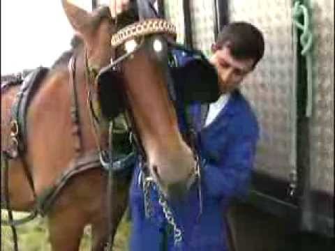 Cheval de trait - Documentaire COMPLET