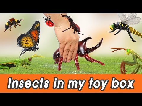 [EN] #57 Insects in my toy box! kids education, Dinosaurs animationㅣCoCosToy