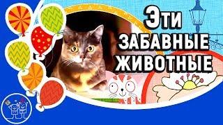 Детское видео для детей. Эти забавные животные. Смешные кошки. Прикольное видео для детей и взрослых