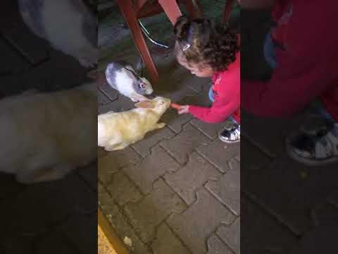 Eslem Mira'dan Tavşanlara Havuç Ziyafeti