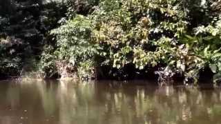 Viaje por el río Yuturi ingresando a la laguna del mismo nombre.