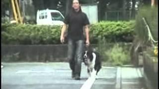 具体的なしつけ方法⇒http://sutoretti.info/aefi ボーダーコリー犬しつ...