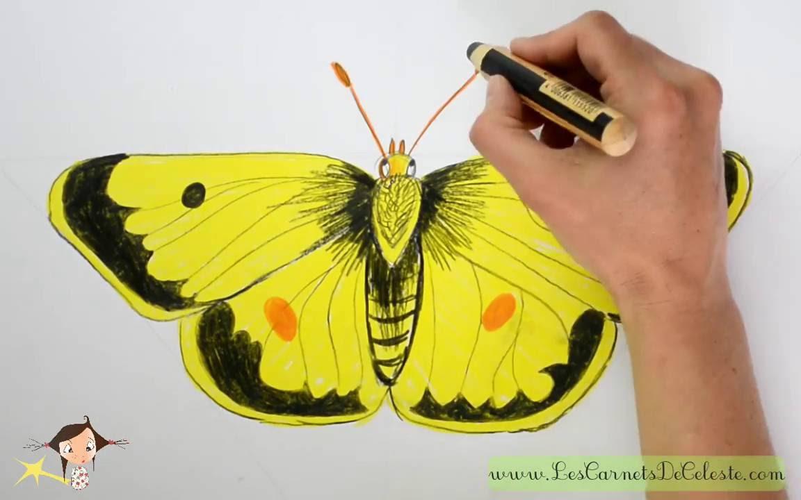 Comment Dessiner Le Souci Un Papillon