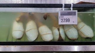 ĂN ĐÙI GÀ, SƯỜN NƯỚNG, Xôi lá sen. Đi chợ HẢI SẢN mua ốc vòi voi mini