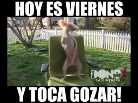 Hoy Viernes De Pachanga Youtube