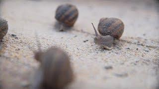 Jak założyć własną hodowlę ślimaków? - Biznes z Franczyzą