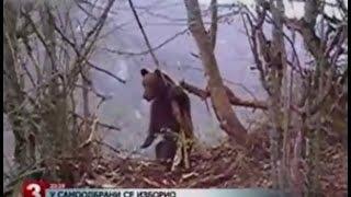 Niedźwiedź zabija kobietę, krokodyl zabija turystę, pit bull zabija mężczyznę i wiele więcej