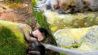 Oh! Baby Timo Try Very Hard To Climb Up The Stone To Meet Mom When She Is Sleeping Well