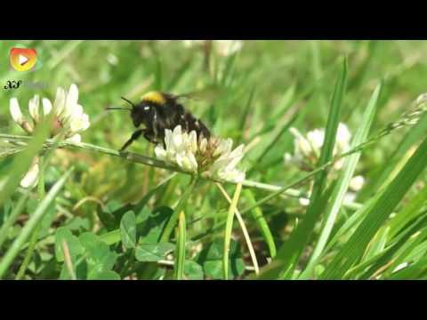 Мурманск. Семеновское озеро. Шмель-трудяга. 3 июля 2016. Лето в коем то веке. Видео 2016.