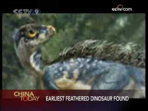 Earliest feathered dinosaur found