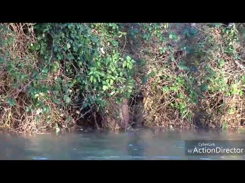action-de-chasse-au-sanglier