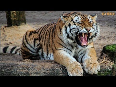 Dạy bé học con vật | Dạy bé học động vật hoang dã tiếng anh | Bài 725