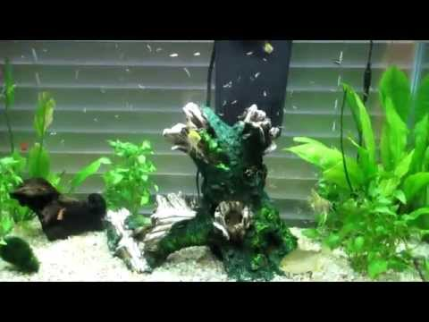 How To Feed Your Fish Frozen Bloodworms