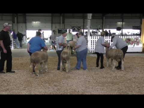 2016 - Sept 26th - Corriedale Show