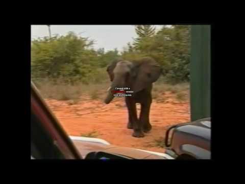 Operation Noah's Ark Kissama National Park Angola