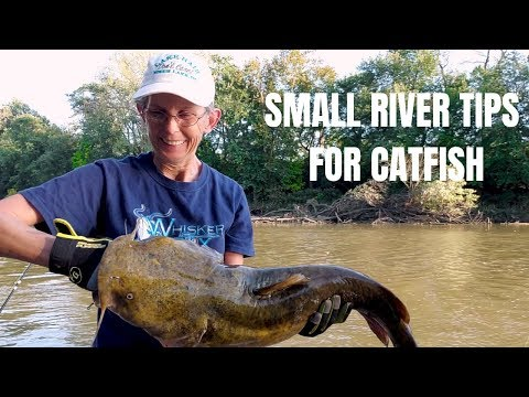 How to Catch Cat fish in Small Rivers - Tips and Tricks - Great Miami River