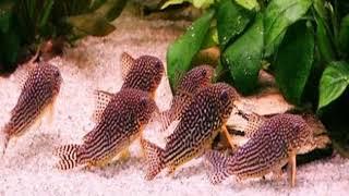 Топ 5 аквариумных рыбок которых легко содержать новичку