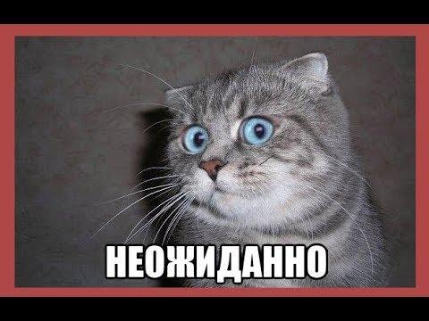 Путін вніс до Держдуми кандидатуру Медведєва на пост прем'єра - Цензор.НЕТ 3636