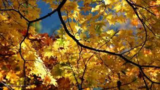"""東京の奥座敷奥多摩の天空の集落""""峰""""に秋が来た、人の気配もなく静寂に..."""