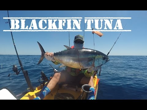 Offshore Kayak Fishing |Monster Blackfin Tuna